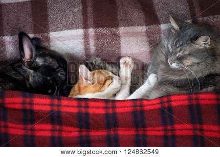 Two cats and a dog sleeping together on the bed under the plaid