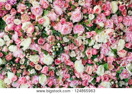 Closeup image of beautiful flowers wall background with amazing red and white roses.