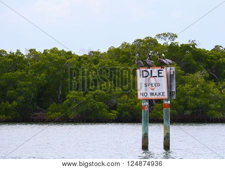 FORT MYERS BEACH, USA - MAY 11, 2015: A group of Brown pelicans sitting and resting on a speed limit-sign in the waters of Estero Bay.