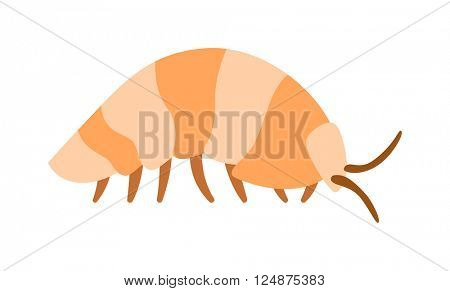 Beetle wood louse exoskeleton armadillo armor insect flat vector.