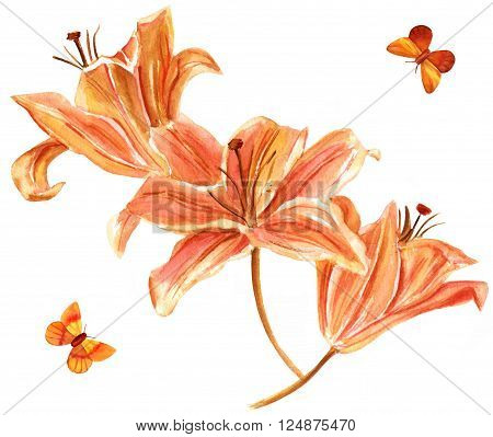 A watercolor drawing of three orange colored lilies with two butterflies hand painted on white