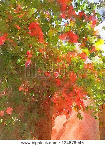 Beautiful bouganvillea against a wall
