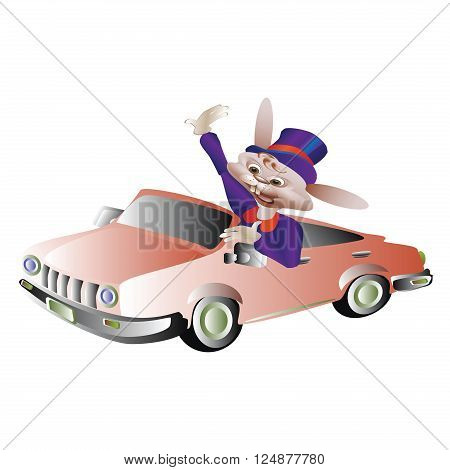 Rabbit in the cylinder drives a car welcomes hand on white background