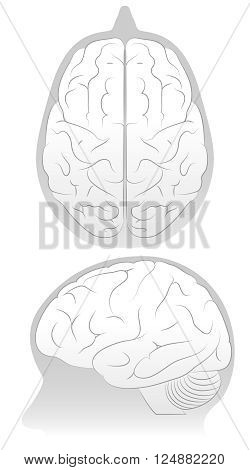 Vector Illustration of Brain in Skull form two angles