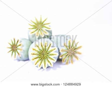 Dried poppy heads isolated on white background