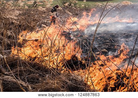 Fireman extinguishes a fire in the reeds.