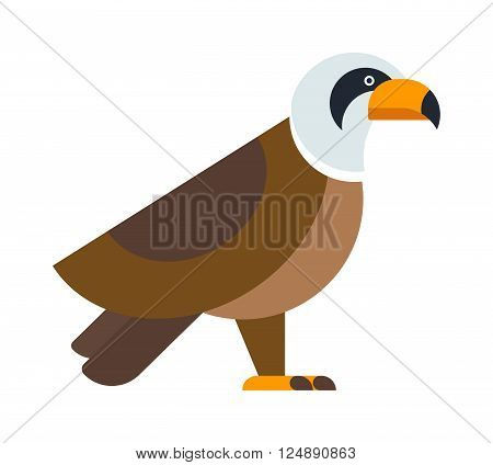 Eagle bird, brown hawk and flying eagle, wild hawk. Freedom national american symbol eagle falcon bird. North American bald eagle raptor wildlife bird and hawk predator animal cartoon vector.