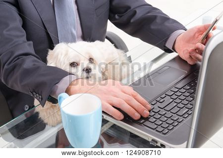 Man working in the office and holding his liitle dog.