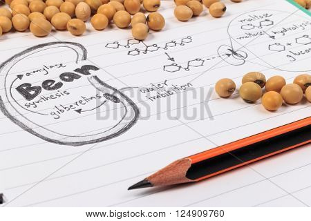 Soybean, Chemical Formula, Pencil And Blue Chemistry With Reaction Formula.