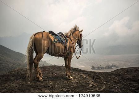 BROMO, JAVA - MARCH 24, 2016: Grey Horse in front of mountains near Volcano Bromo Java Indonesia