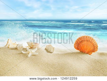 Tropical beach with shells.