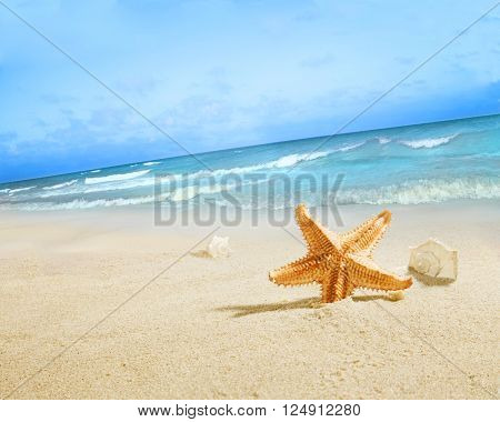 Landscape with starfish on sunny beach.