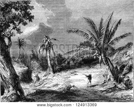 Landscape in Guadeloupe, vintage engraved illustration. Magasin Pittoresque 1847.