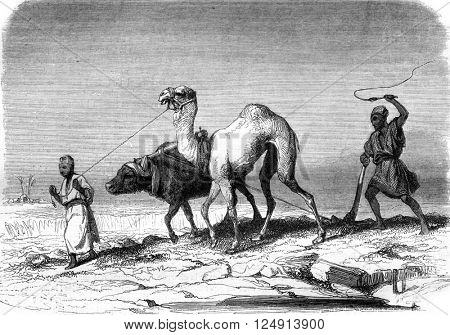 Plowing scene in Egypt, vintage engraved illustration. Magasin Pittoresque 1847.