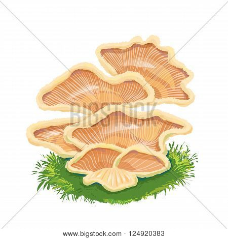 Heap plate of mushrooms mushroom family on grass an icon with a few mushrooms.