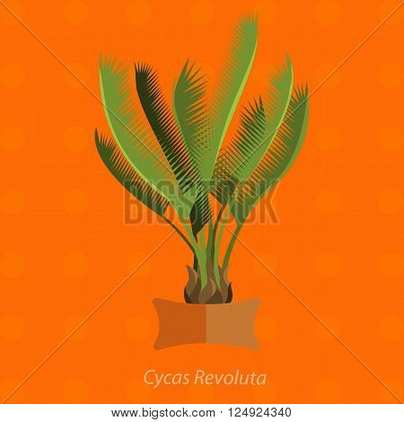 Africa plants. Palm trees, flowers and green grass, white background. Plants of Arica in set. Potted flat plants. Africa ecology herb. Plants of Africa for your garden.