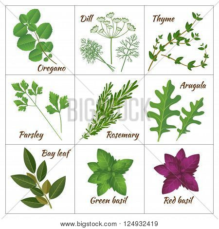Realistic style vector illustration. Set of different culinary herbs or medicinal curative aromatic herbs and spices. Fresh organic vegetarian food isolated on white background
