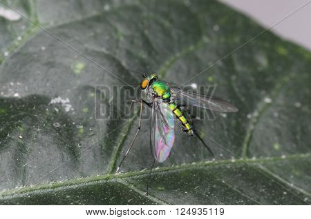 Fly insect live in the garden and house