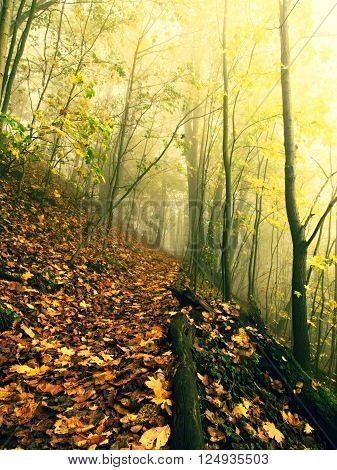 Fallen Trunk In Golden Autumn Forest, Tourist Stony Footpath. Broken Rotten Tree.