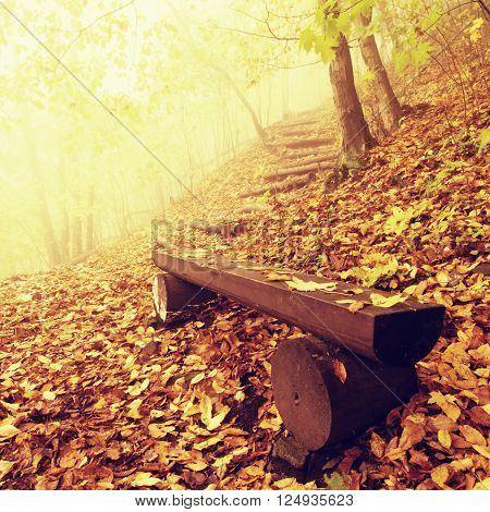 The autumn misty and sunny daybreak at beech forest, old abandoned bench below trees. Fog between naked beech trees.