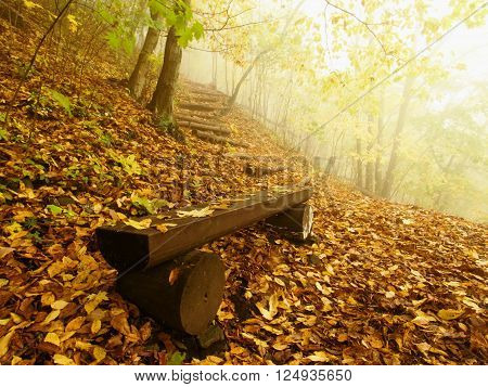 The Autumn Misty And Sunny Daybreak At Beech Forest, Old Abandoned Bench Below Trees. Fog Between Be