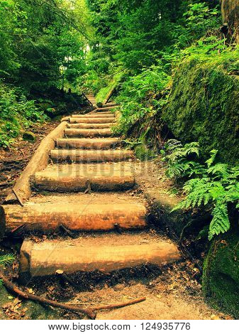 Old Wooden Stairs In Overgrown Forest Garden, Tourist Footpath. Steps From Cut Beech Trunks, Fresh G