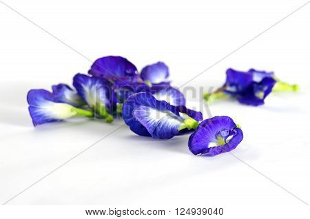 Butterfly pea or Blue pea flowers (Science name Clitoria ternatea L. other names are Orchid Station Orchid travel) isolated on white background