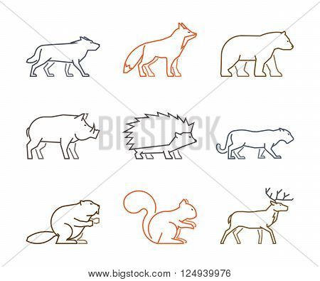Colored outline set of forest animals. Line silhouettes wild animals isolated on white. Vector icons boar squirrels deer and beaver. Linear symbol fox puma wolf and bear.