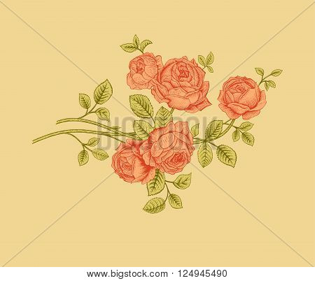 Floral composition. Branch bush coral rose garden. Vintage vector illustration. Design element.
