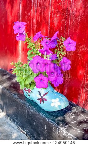 purple petunias growing in decorative pot on red wall background