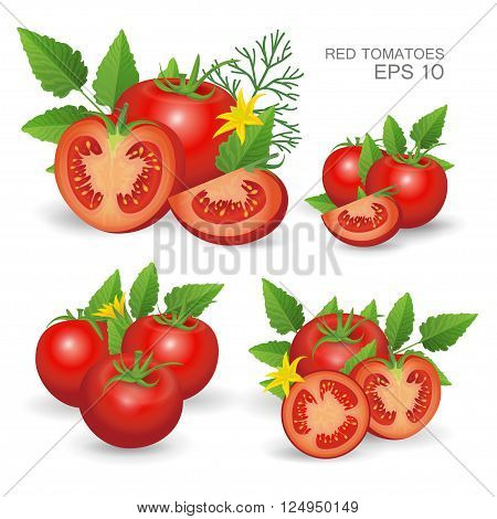 Vector illustration. Set of red ripe fresh realistic tomatoes composition with leaves blossom and dill isolated on white background