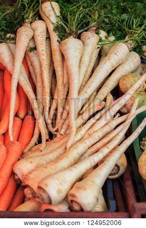 Parsley Root Vegetable