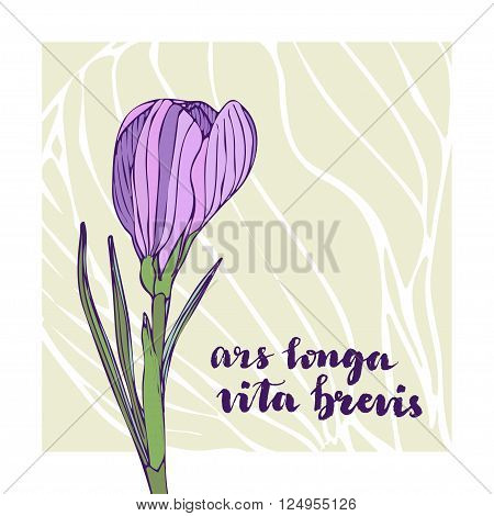 Vector vintage greeting card with crocus flower and lettering. Latin text - Ars longa vita brevis. Art long life short