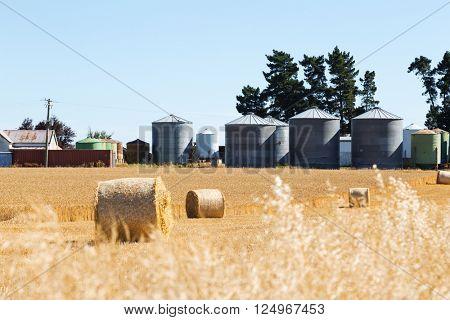landscape of wheat field in summer day in new zealand
