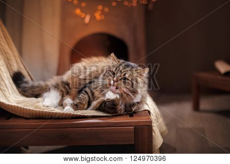 Gray And Black Tabby Cat Relaxing