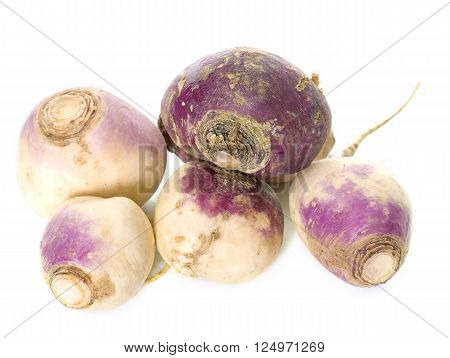 fresh turnip in front of white background