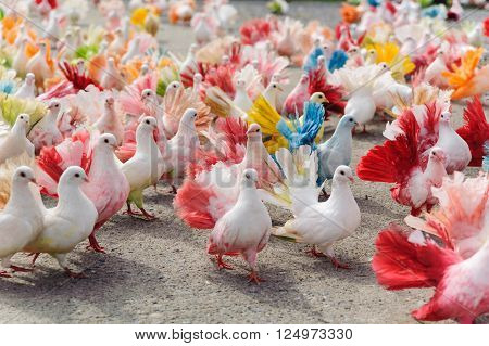 Multicolored pigeons in pigeon's farm in Thailand