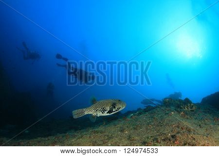 Scuba divers and puffer fish