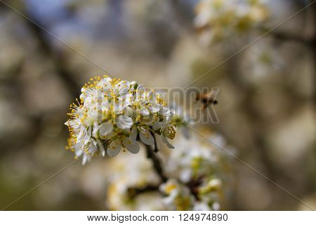 Blooming Fruit Trees In Spring Garden