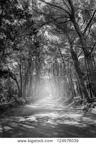 Black and white forest road on greek Kos island