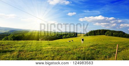 Landscape with field and cow.Summer landscape with green grass and sun. ** Note: Soft Focus at 100%, best at smaller sizes