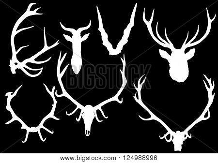 illustration with set of antler and horns isolated on black background