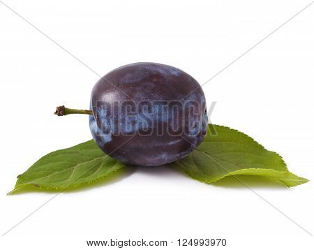 One plum with leaves on a white background