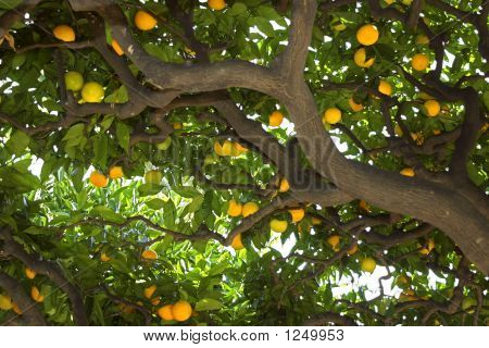 Under The Lemon Tree