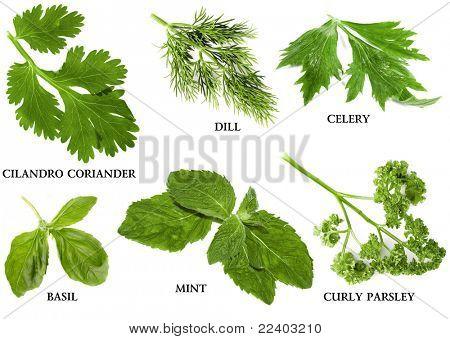Coleção de nomes, isolados no fundo branco e ervas frescas