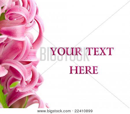 schönen Frühling, Hyazinthe Blumenkarte für Ihren text