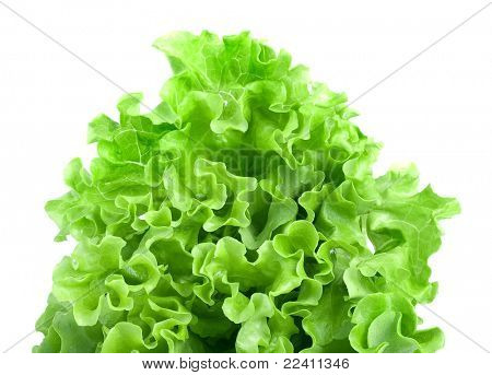 Fresh lettuce leaves  isolated on white background