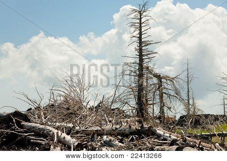 Breakage Dead Pines