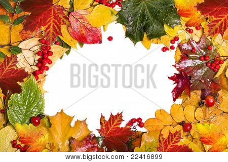frame of autumn leaves and berries