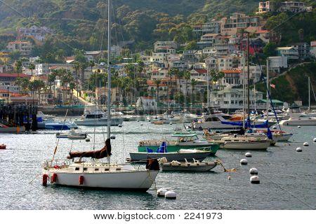 Catalina Bay  Boats